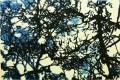 kunstkaart-sneeuwboom